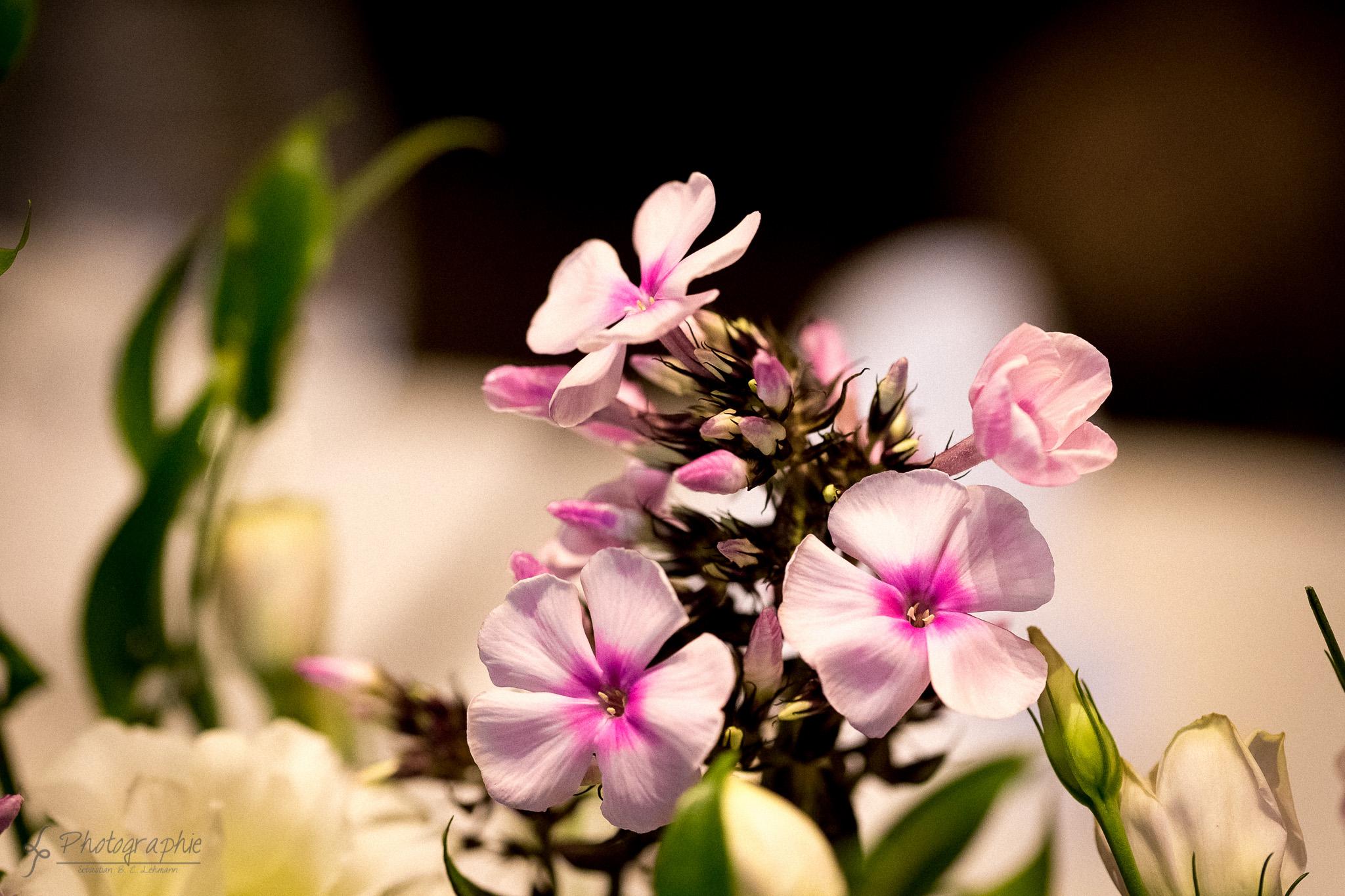 Fotograf-Dueren-Produktfotografie-Blume-1
