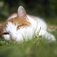 Fotograf Düren - Tierportrait